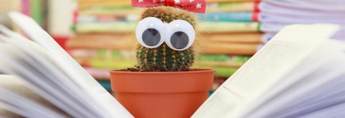cactus-1063094_960_720
